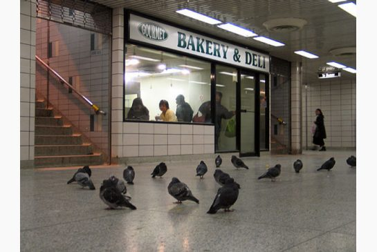 pigeons_paradise_at_subwaystation.jpeg.size.xxlarge.letterbox